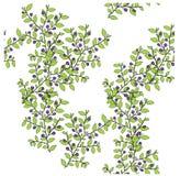 Элемент дизайна картины голубики красочный безшовный Стоковая Фотография