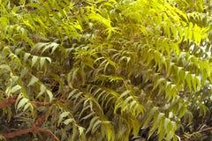 ЭМИРАТЫ DUBAI-UNITED АРАБСКИЕ 21-ОГО ИЮЛЯ 2017 листья зеленого цвета Естественная картина листьев заводов с солнечным светом Стоковое Изображение