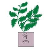Эмоциональный бак с кактусом Любимые крытые заводы Стоковые Изображения