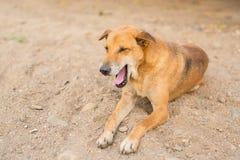 Эмоция собаки Стоковые Изображения RF