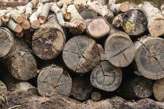 Энергия огня природы деревьев швырка Стоковая Фотография RF
