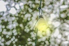 Энергосберегающие лампы с белым bokeh предпосылки естественным Стоковое Изображение RF