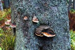 Эпицентры деятельности растя на дереве стоковое изображение rf