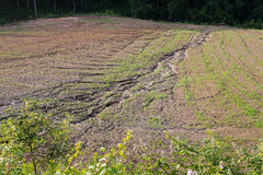 Эрозия почвы на культивируемом поле после тяжелого ливня Стоковое Изображение