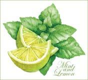 Эскизы лимона и мяты Стоковое Изображение