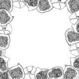Эскиз вектора шаржа плодоовощ смоквы для знамени или открытки бесплатная иллюстрация