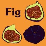 Эскиз вектора шаржа плодоовощ смоквы для открытки stiker знамени бесплатная иллюстрация