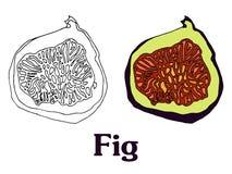 Эскиз вектора шаржа плодоовощ смоквы для открытки stiker знамени иллюстрация штока