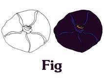 Эскиз вектора шаржа плодоовощ смоквы для открытки stiker знамени иллюстрация вектора