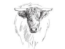 Эскиз головы быка Стоковое Изображение