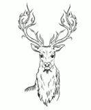 Эскиз головы оленей Иллюстрация вектора