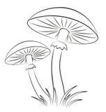 Эскиз грибов Стоковые Фото