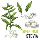 Эскиз еды полного цвета супер нарисованный рукой иллюстрация вектора