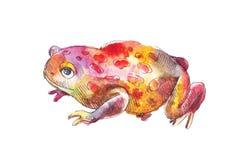 Эскиз жабы в акварели Эскиз нарисованный рукой красной жабы Стоковая Фотография
