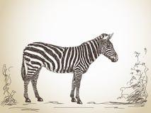 Эскиз зебры Стоковое Изображение RF