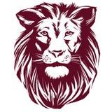 Эскиз иллюстрации вектора льва нарисованный рукой реалистический Стоковые Изображения