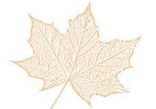 Эскиз кленового листа коричневый на белой предпосылке Стоковое Изображение RF