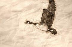 Эскиз летания гусыни Канады через древесины осени иллюстрация вектора