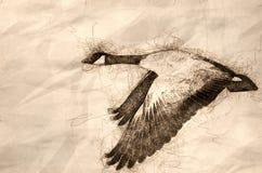 Эскиз летания гусыни Канады через древесины осени иллюстрация штока