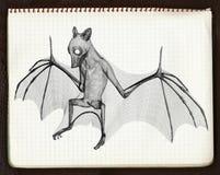 эскиз летучей мыши 3d 4 Стоковые Фото