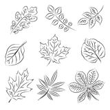 эскиз листьев осени установленный Стоковое Изображение