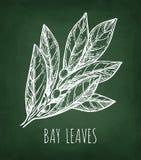 Эскиз мела листьев залива Стоковое Фото