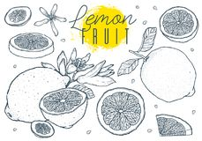 Эскиз плодоовощ установленный лимонами нарисованный рукой сбор винограда типа лилии иллюстрации красный также вектор иллюстрации  Стоковое Изображение RF