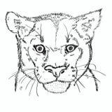 Эскиз пумы головной иллюстрация вектора