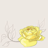 Эскиз розы желтого цвета Стоковое Изображение