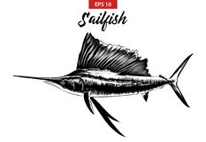 Эскиз руки вычерченный sailfish в черноте изолированного на белой предпосылке Детальный винтажный чертеж стиля вытравливания бесплатная иллюстрация