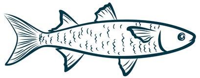 Эскиз рыб моря стоковая фотография