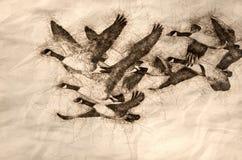 Эскиз гусынь Канады летая через древесины осени иллюстрация штока