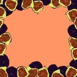 Эскиз шаржа плодоовощ смоквы для знамени или открытки бесплатная иллюстрация