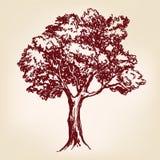 Эскиз llustration вектора дерева нарисованный рукой Стоковое Фото