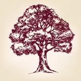 Эскиз llustration вектора дерева нарисованный рукой Стоковые Изображения