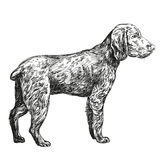 Эскиз llustration вектора звероловства собаки нарисованный рукой Стоковая Фотография RF
