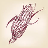 Эскиз llustration вектора стержня кукурузного початка нарисованный рукой Стоковые Фотографии RF