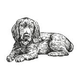 Эскиз llustration вектора spaniel собаки нарисованный рукой Стоковые Фото
