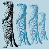 эскиз meercat Стоковые Изображения