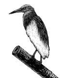 Эскиз Pondheron иллюстрация штока