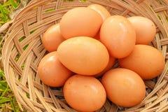 Эстер яичка в еде корзины Стоковые Фото