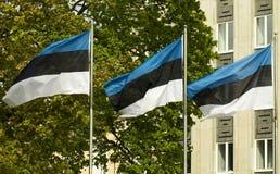 Эстонские флаги перед квадратом свободы Стоковая Фотография RF
