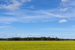 Эстонский сельский ландшафт Стоковые Изображения RF