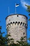Эстонский флаг на высокорослой башне Hermann в старом городке Таллина, Эстонии Стоковая Фотография