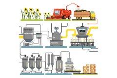 Этапы производственного процесса добычи нефти солнцецвета, жать солнцецветы и паковать законченного - продукты vector иллюстрации бесплатная иллюстрация