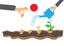 Этапы роста завода и семени к дереву Стоковая Фотография