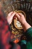 Этапы урожая белой фасоли: сухой неоткрытый урожай с готовыми сухими фасолями такого же завода стоковые изображения