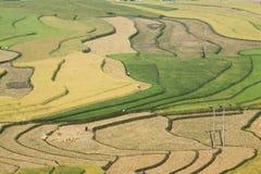 Этапы цвета полей Стоковое Фото