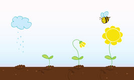 этапы цветка растущие Стоковые Фотографии RF