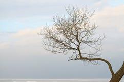 Эта ветвь дерева против неба Стоковая Фотография